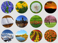 WordPress Grid Gallery with Captions | WordPress and