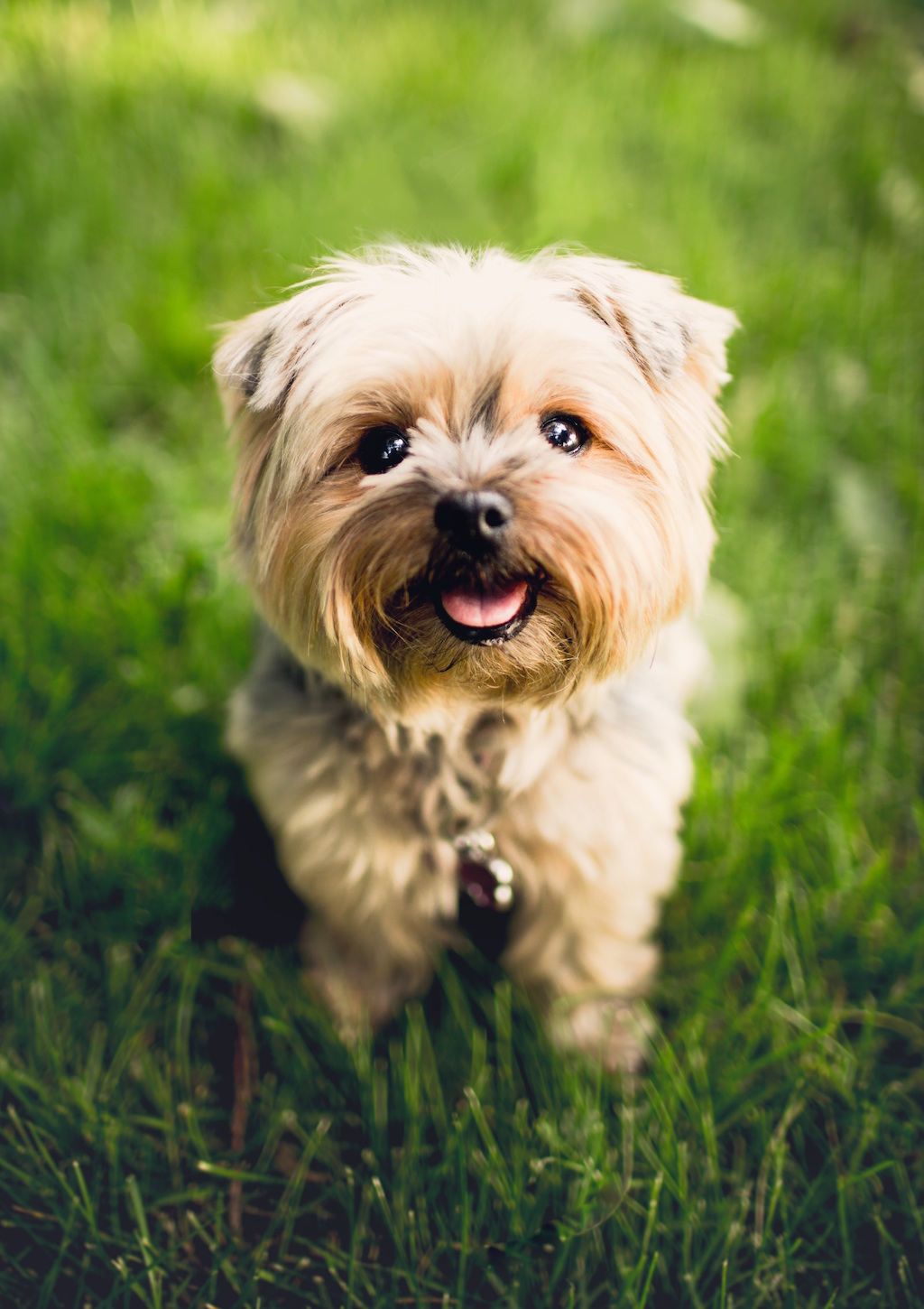Unsplash Cute Dog
