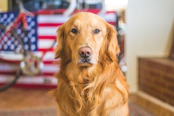 unsplash-dog5