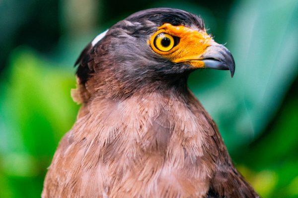 unsplash-eagle