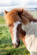 unsplash-horse