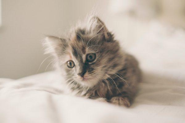 unsplash-kitten