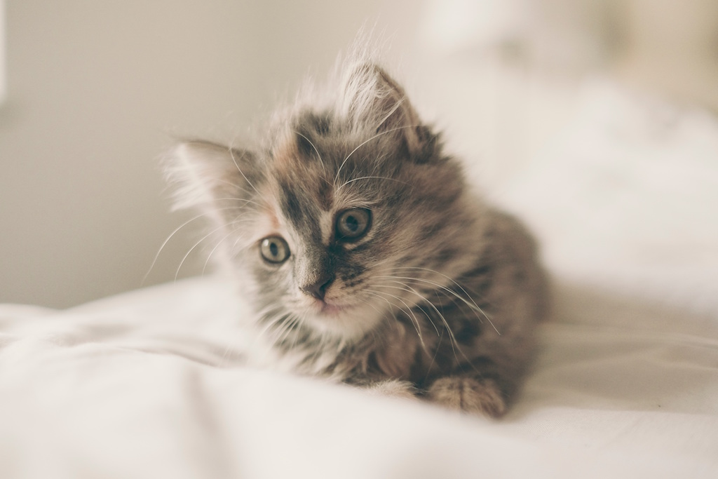 Unsplash Kitten