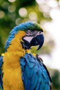 unsplash-parrot