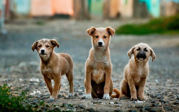 unsplash-threedogs