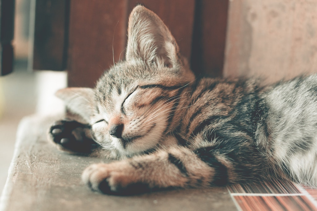 adorable-animal-animal-photography-1056251