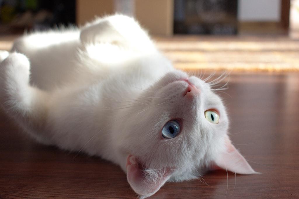 adorable-animal-animal-photography-1476254