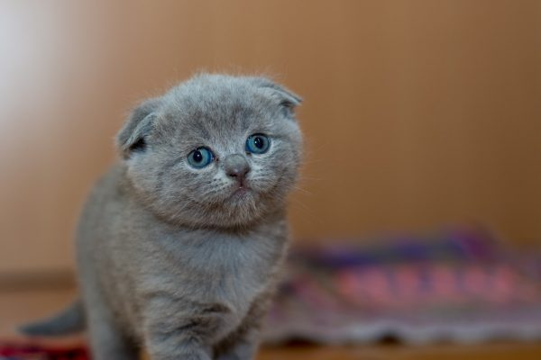 adorable-animal-cat-127028