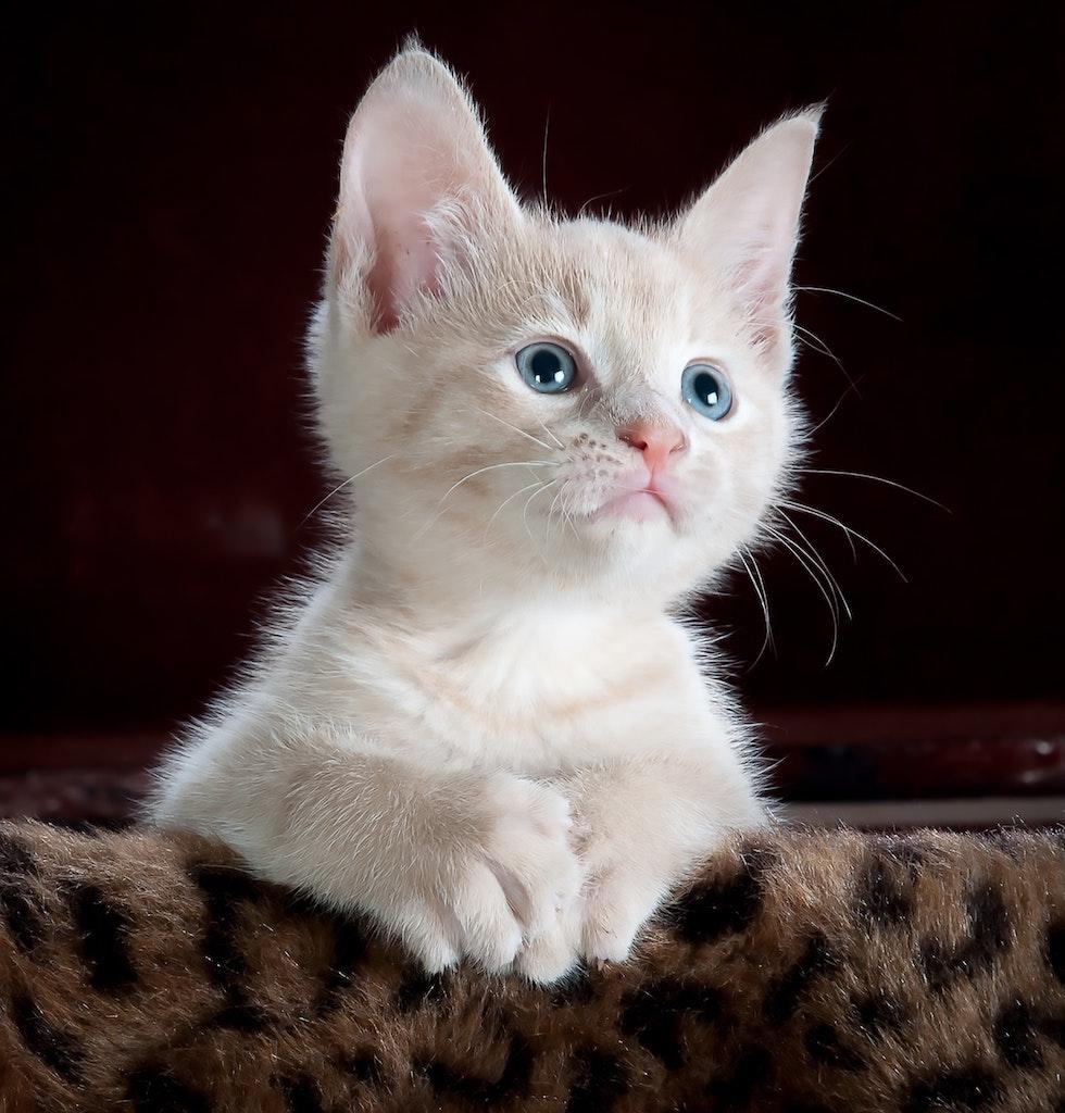 animal-cat-cute-45201