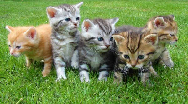 animals-cats-cute-45170
